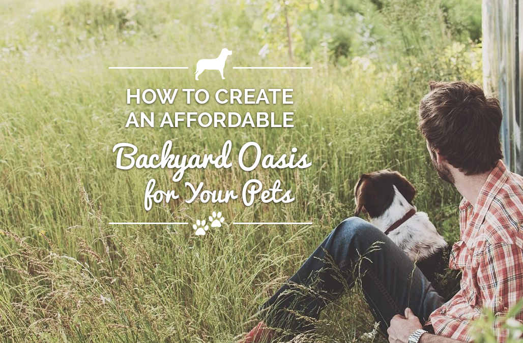 How to Create an Affordable Backyard Oasis for Your Pet